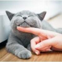 Kattenvoeders